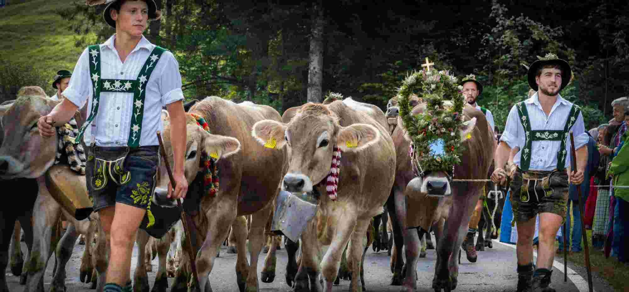 Viehscheid, Almabtrieb in Oberstaufen