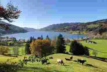Großer Alpsee im Herbst