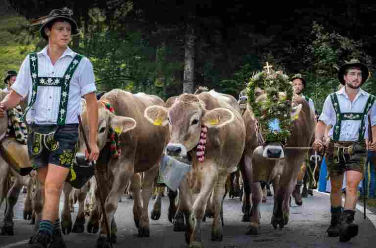 Viehscheid in Oberstaufen